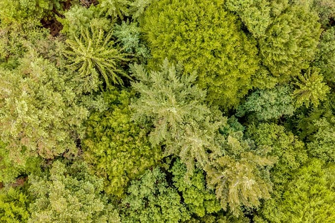 Las, zdjęcie z drona